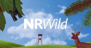 NRWild