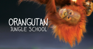 Orangutan Jungle School - Kindergarten mal anders
