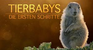 Tierbabys - Die ersten Schritte