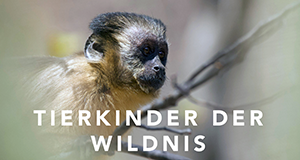 Tierkinder der Wildnis