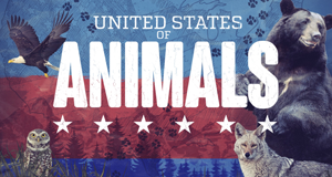 United States of Animals