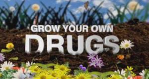 Heilpflanzen - Wellness aus dem eigenen Garten