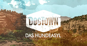 DogTown - Das Hundeasyl
