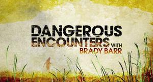 Gefährliche Begegnungen