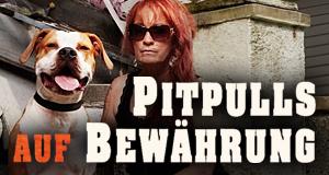 Pitbulls auf Bewährung