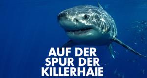 Auf der Spur der Killerhaie