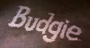 Budgie