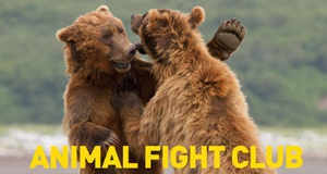 Animal Fight Club