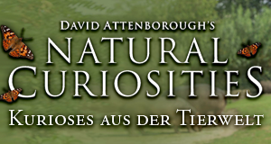 David Attenboroughs Wunder der Natur