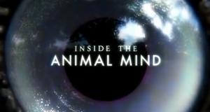 Einfach clever: Wie Tiere denken