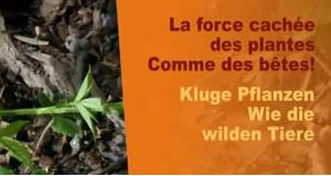 Kluge Pflanzen