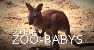 Berliner Zoo-Babys