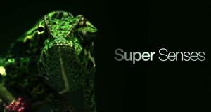 Super-Sinne der Tiere