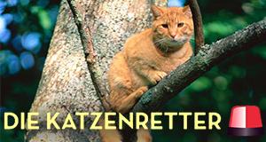 Die Katzenretter - Einsatz in der Baumkrone