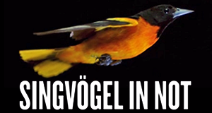Singvögel in Not