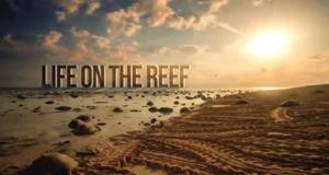 Lebensraum Riff