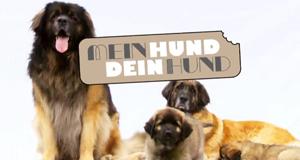 mein hund dein hund news termine streams auf tv. Black Bedroom Furniture Sets. Home Design Ideas