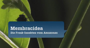 Membracidea - Die Freak-Insekten vom Amazonas