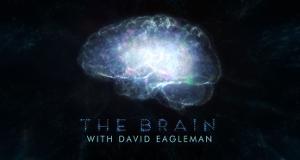 The Brain - Das menschliche Gehirn