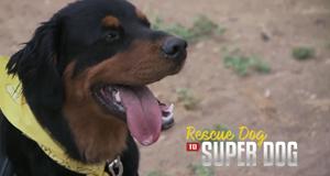 Super Dogs - Helfer in der Not