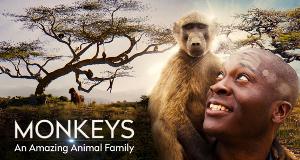 Affen - Eine faszinierende Tierfamilie