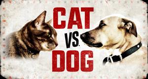 Cat vs. Dog - Die Tiertherapie