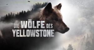 Die Wölfe des Yellowstone