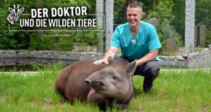 Der Doktor und die wilden Tiere