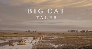 Big Cat Tales - Afrikas Raubkatzen