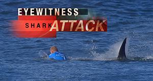 Haiattacken: Augenzeugen berichten