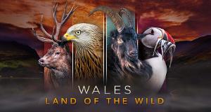 Wales - Der Wilde Westen Großbritanniens