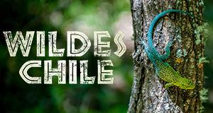 Wildes Chile