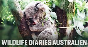 Wildlife Diaries Australien