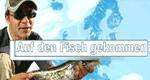 Auf den Fisch gekommen