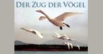 Der Zug der Vögel