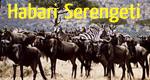Habari Serengeti