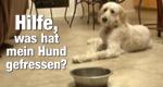 Hilfe, was hat mein Hund gefressen?