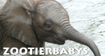 Zootierbabys