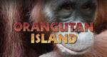 Insel der Orang-Utans
