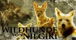 Die Wildhunde von Nilgiri
