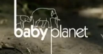 Tierbabys - Willkommen im Leben