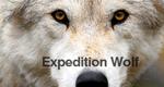 Expedition Wolf - Die Rückkehr eines Raubtieres