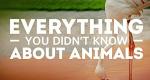 Tierisch unglaublich!