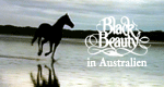 Black Beauty in Australien